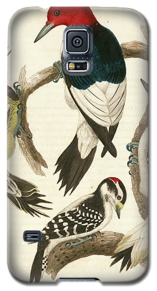 1. Red-headed Woodpecker. 2. Yellow-bellied Woodpecker. 3. Hairy Woodpecker. 4. Downy Woodpecker. Galaxy S5 Case