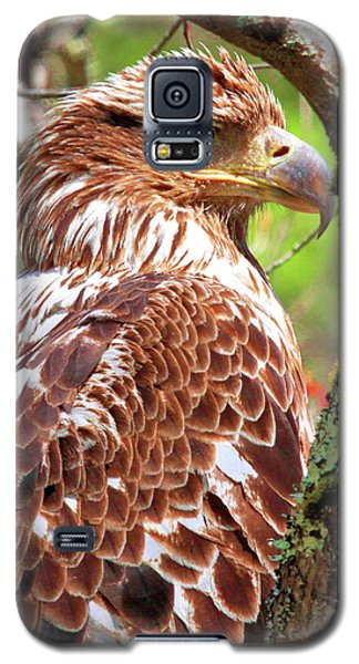 Immature Eagle Galaxy S5 Case