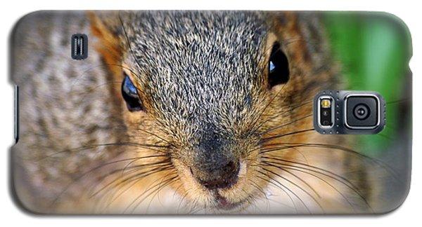 In Your Face Fox Squirrel Galaxy S5 Case