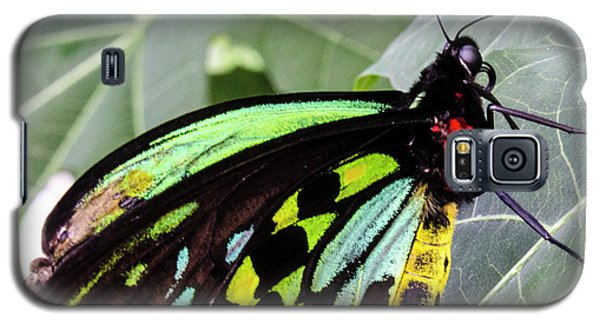 Insect Kaleidescope Galaxy S5 Case