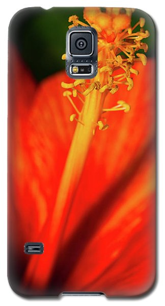 Into A Flower Galaxy S5 Case