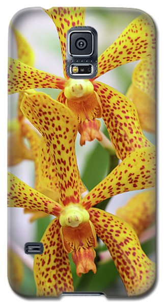 Intriguing Yellow Spider Orchids Galaxy S5 Case