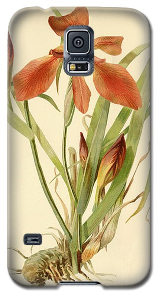 Iris Cuprea Copper Iris.  Galaxy S5 Case