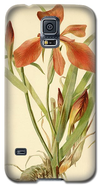 Iris Cuprea Copper Iris.  Galaxy S5 Case