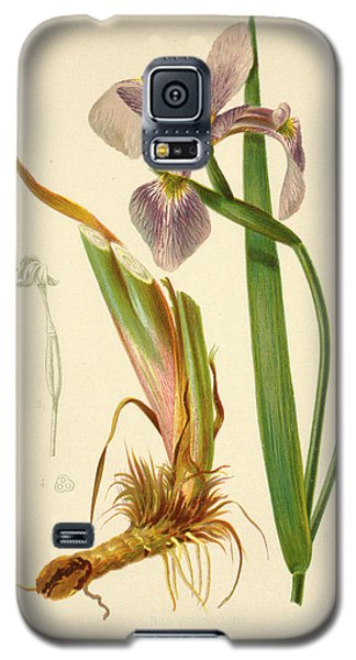 Iris Versicolor Blue Flag Galaxy S5 Case