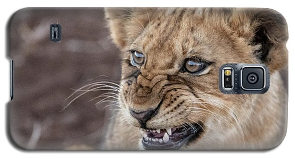 Irritated Lion Cub Galaxy S5 Case