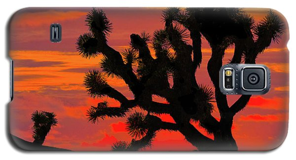 Joshua Tree At Sunset Galaxy S5 Case