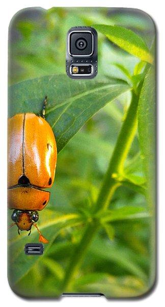 June Bug Galaxy S5 Case