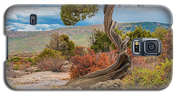 Juniper At Dragon Point Galaxy S5 Case
