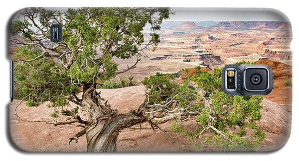 Juniper Over The Canyon Galaxy S5 Case