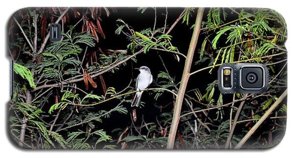 Kingbird At Night Galaxy S5 Case