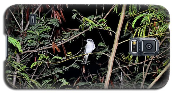 Kingbird At Night Galaxy S5 Case
