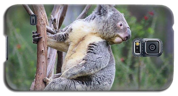 Koala In Tree Galaxy S5 Case