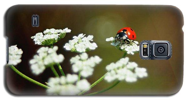 Ladybug In White Galaxy S5 Case