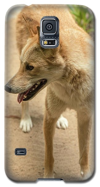 Large Australian Dingo Outside Galaxy S5 Case