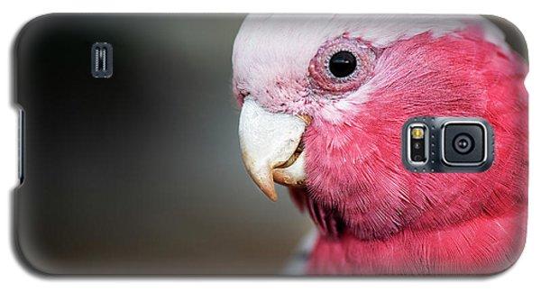 Large Pink And Grey Galah. Galaxy S5 Case
