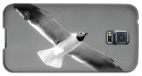 Laughing Seagull Galaxy S5 Case