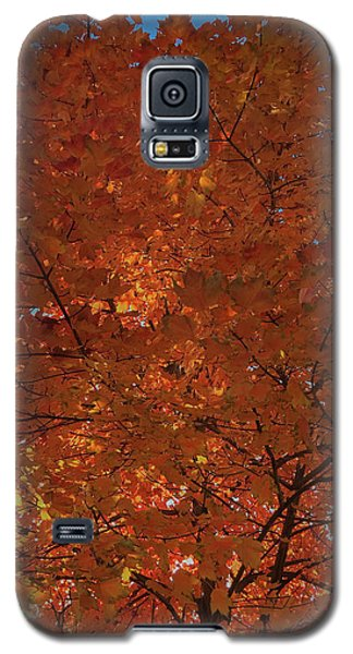 Leaves Of Fire Galaxy S5 Case