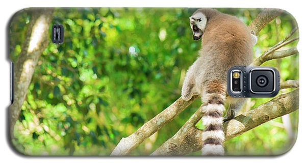 Lemur By Itself In A Tree During The Day. Galaxy S5 Case