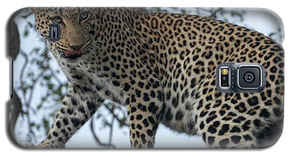 Leopard Anticipation Galaxy S5 Case