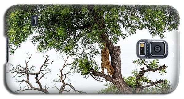Leopard Descending A Tree Galaxy S5 Case