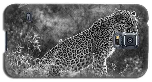Leopard Sitting Black And White Galaxy S5 Case