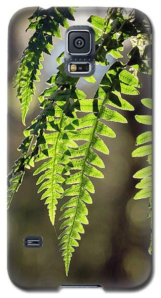 Licorice Fern Galaxy S5 Case