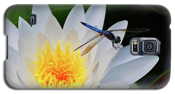 Lily And Dragonfly Galaxy S5 Case