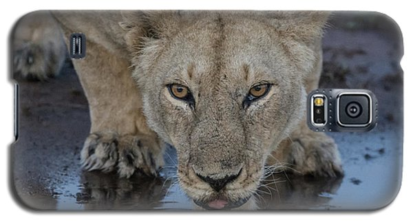 Lioness Drinking Galaxy S5 Case