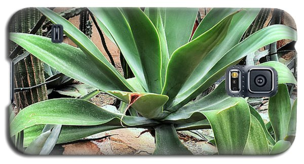Lion's Tail Agave Galaxy S5 Case