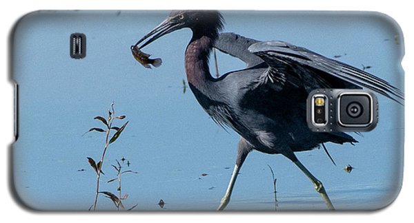Little Blue Heron With Fish Galaxy S5 Case