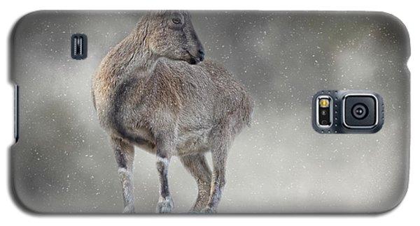 Little Rock Climber Galaxy S5 Case