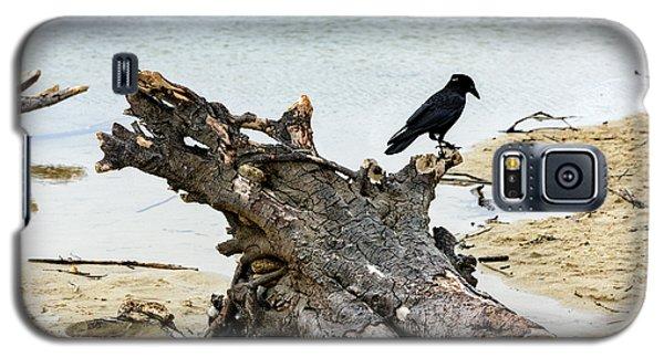 Lone Carmel Crow Atop Driftwood Galaxy S5 Case