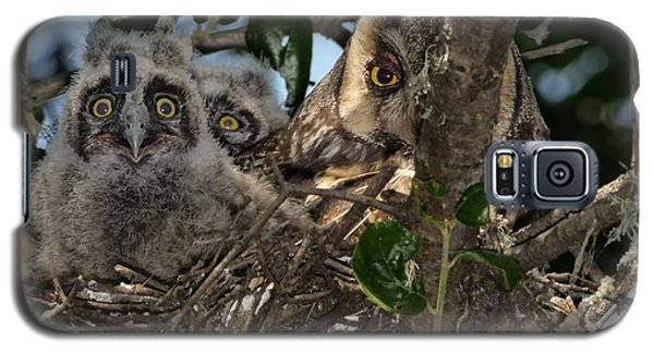 Long-eared Owl And Owlets Galaxy S5 Case