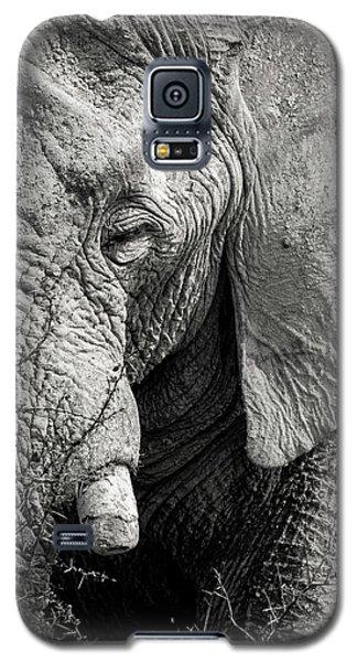 Look Of An Elephant Galaxy S5 Case