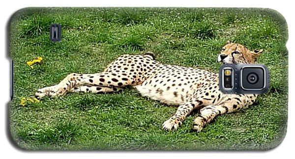 Lounging Cheetah Galaxy S5 Case