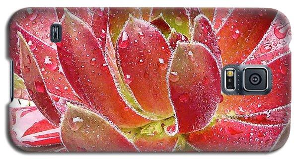 Magical Succulent Galaxy S5 Case