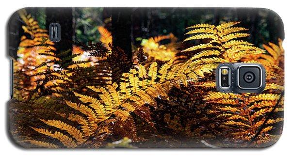 Maine Autumn Ferns Galaxy S5 Case