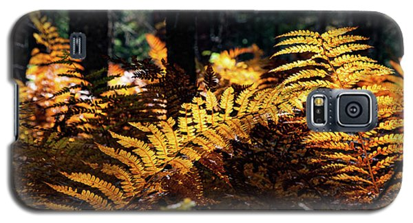 Maine Autumn Ferns Galaxy S5 Case