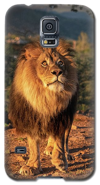 Male African Lion In Early Light Galaxy S5 Case