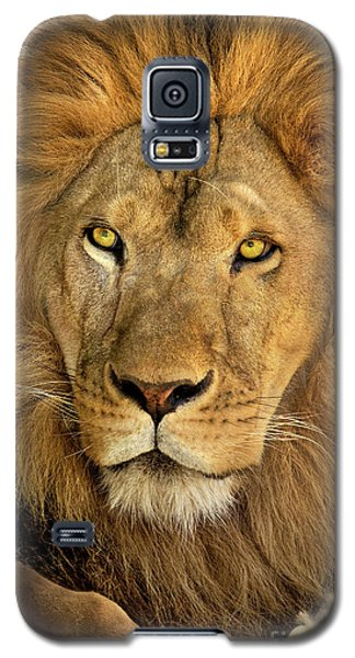 Male African Lion Portrait Wildlife Rescue Galaxy S5 Case