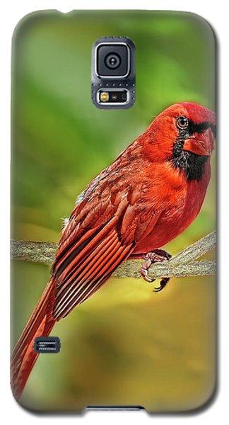 Male Cardinal Headshot  Galaxy S5 Case