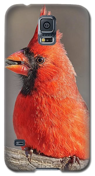Male Cardinal With Sunflower Seed Galaxy S5 Case