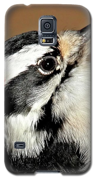 Male Downy Woodpecker Galaxy S5 Case