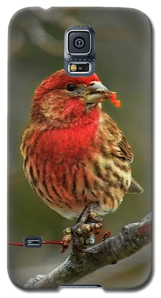 Male House Finch With Crabapple Galaxy S5 Case