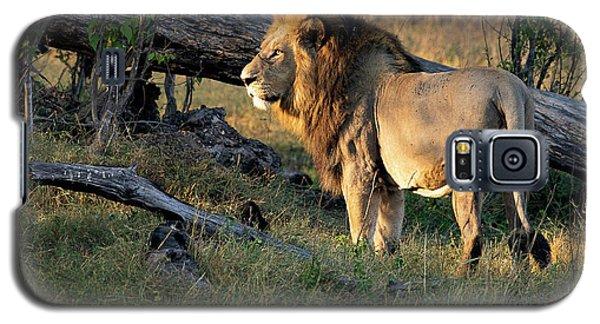 Male Lion In Botswana Galaxy S5 Case