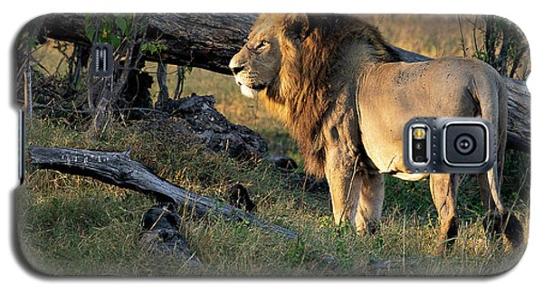Male Lion In Botswana Galaxy S5 Case