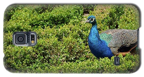 Male Peafowl In Retiro Park, Madrid, Spain Galaxy S5 Case