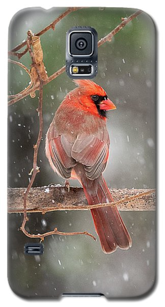 Male Red Cardinal Snowstorm Galaxy S5 Case