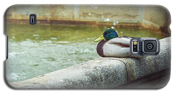 Mallard Resting On The Fountain Of The Fallen Angel In The Retiro Park - Madrid, Spain Galaxy S5 Case